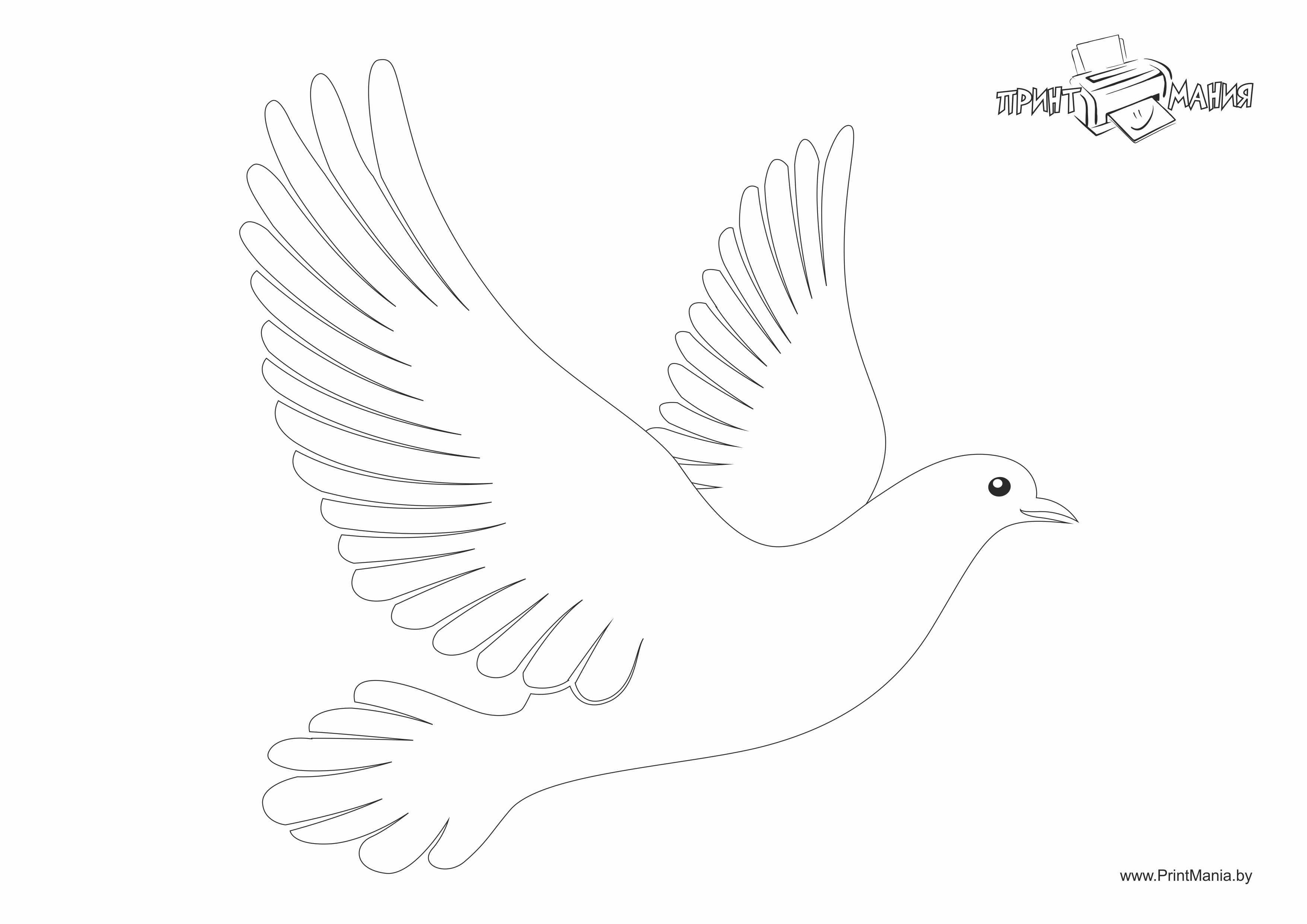 Сделать, шаблоны голубей для открытки