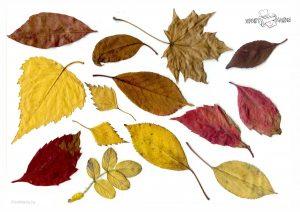 Красивые осенние листья